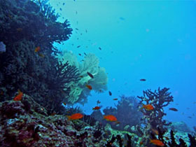 L arcipelago delle mentawai il nuovo paradiso della subacquea - Dive time tours ...